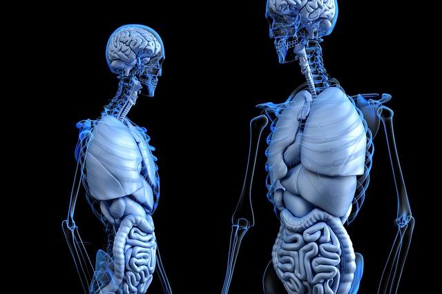anatomie těla