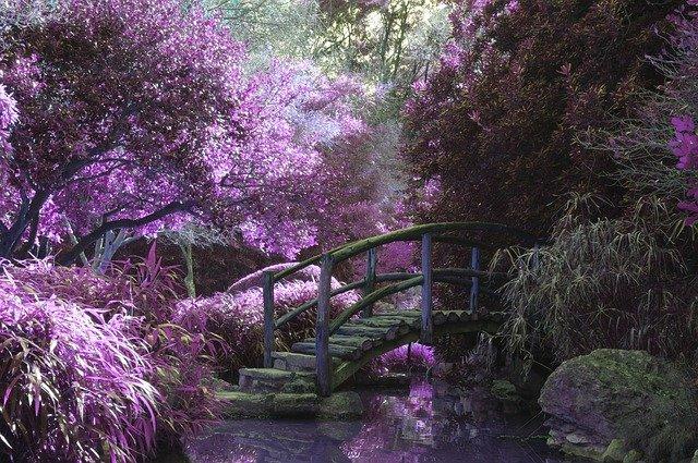 rozkvetlá zahrada